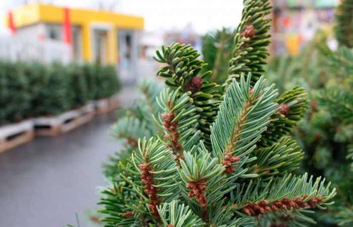 В Киеве работает почти сотня елочных ярмарок